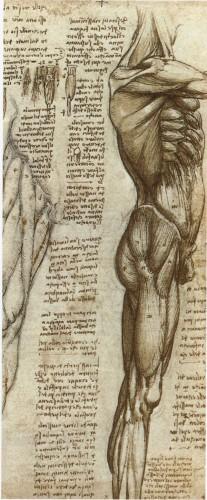 b.602.1000.16777215.0...images.stories.picture.publ.Leonardo-da-Vinci.Leonardo_da_Vinci-023