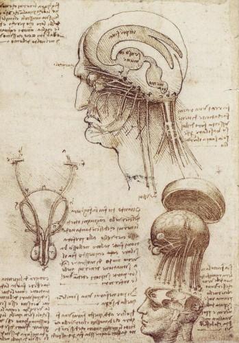 brainphysiology